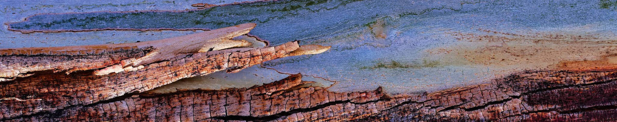 photography lessons for precise focusing on tree bark